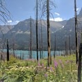 Charred trees allowing for lake views.- Saint Mary Falls