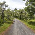 Carriage road to Lake Awosting Beach.- Minnewaska State Park Preserve
