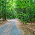 Campground road.- Quechee State Park Campground