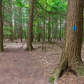 The campground trail down into the gorge is marked with blue blazes.- Quechee State Park Campground