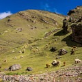 Llamas and alpacas greet you for the entirety of the hike.- Vinicunca / Rainbow Mountain