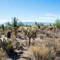 There are many species of cactus along the trail.- Bajada Nature Trail