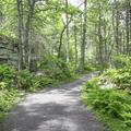 The Hamilton Point Carriage Road leading to Lake Minnewaska.- Minnewaska State Park Preserve