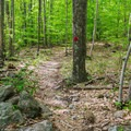 The trail near the beginning of the hike.- Red Hill Fire Tower via Red Hill + Cabin Trails