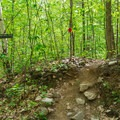 A section where the trail has been rerouted is clearly signed.- Red Hill Fire Tower via Red Hill + Cabin Trails