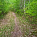 Much of the Cabin Trail ascends gradually with good footing.- Red Hill Fire Tower via Red Hill + Cabin Trails