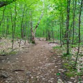 A flatter section near the top.- West Rattlesnake Mountain