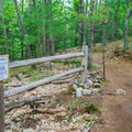 Trail closures for revegetation help protect the mountain's biodiversity.- West Rattlesnake Mountain