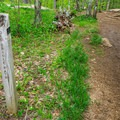 The Old Bridle Path takes you back the way you came.- West Rattlesnake Mountain