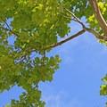 Leafy boughs border the spring.- Vortex Spring