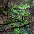 This stream in the Acadian forest is filled with brilliant green moss.- Dickson Falls Trail