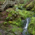 The Dickson Falls Trail passes a series of small waterfalls surrounded by brightly-colored green moss.- Dickson Falls Trail