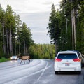Elk are known to cause traffic jams right at the campground entrance!- Bridge Bay Campground