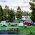 Bison grazing in the campground is part of the experience. Keep a safe distance!- Bridge Bay Campground