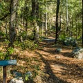 Many hiking trails surround the campground.- General Hitchcock Campground