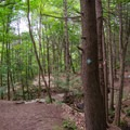 Three different trails make up the over 8-mile system.- High Falls Conservation Area