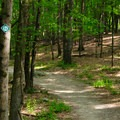 A well-marked and well-maintained trail make for an easy and enjoyable hike.- High Falls Conservation Area