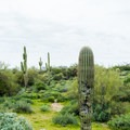 A myriad of cacti varieties grow in Lost Dutchman State Park.- Lost Dutchman State Park