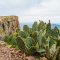 Prickly pear cactus at the top of Flatiron.- Lost Dutchman State Park