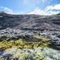 Tide pools are a host to a plethora of intertidal organisms.- Makapu'u Tide Pools