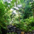 The trail follows along the stream and water pipe.- Ka'au Crater Hike