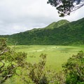 Looking into the crater marsh that feeds the falls.- Ka'au Crater Hike