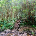 The descent trail drops hikers off below the waterfalls, back along the river.- Ka'au Crater Hike