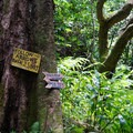 Follow the signs and the river bed back to the parking area.- Ka'au Crater Hike
