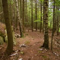 The trail to the overlooks is lined with sections of fallen birch.- Beer Walls in Chapel Pond Canyon