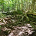A section of the West Ridge Trail.- Cardigan Mountain State Park