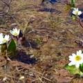 Beautiful wildflowers along the trail.- Lost Lake Hike