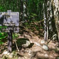 The start of the Signal Ridge Trail to Cardigan.- Mount Carrigain via Signal Ridge
