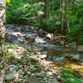 The first part of the trail wanders along the brook.- Mount Carrigain via Signal Ridge