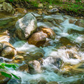 Carrigain Brook.- Mount Carrigain via Signal Ridge