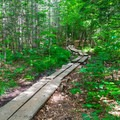 A section of boardwalks just before the first junction.- Mount Carrigain via Signal Ridge