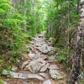 A typical trail as it ascends to Signal Ridge.- Mount Carrigain via Signal Ridge
