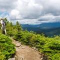 The trail along Signal Ridge.- Mount Carrigain via Signal Ridge