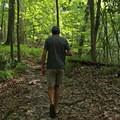 Hiking the Weeping Ridge Trail.- Torreya State Park