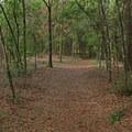 Hiking in Torreya State Park.- Torreya State Park
