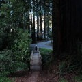Cascade Drive.- Mill Valley's Old Mill Park and the Dipsea Steps
