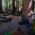 Old Mill Park.- Mill Valley's Old Mill Park and the Dipsea Steps