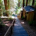 Dipsea Steps.- Mill Valley's Old Mill Park and the Dipsea Steps