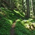 Horseshoe Ridge Trail winds through sections of lush forest.- Zig Zag Mountain via the Horseshoe Ridge Trail