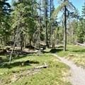 The flat beginning of the Horseshoe Ridge Trail.- Zig Zag Mountain via the Horseshoe Ridge Trail