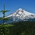 Mount Hood.- Zig Zag Mountain via the Horseshoe Ridge Trail