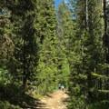 Wide trail to Boulder Meadow Reservoir.- Boulder Lake
