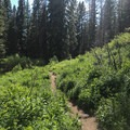The trail passes through several wildflower meadows.- Boulder Lake