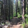 The trail travels through dense forest.- Boulder Lake