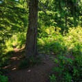 The trail junction near the lookout site with the trail to the right leading to the true summit.- Henline Mountain