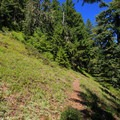 Another smaller meadow along the ridge trail.- Henline Mountain